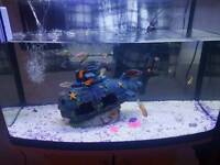 64l fish tank with all accessories and 15 tropic fish