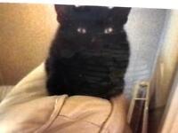 MISSING CAT OSCAR