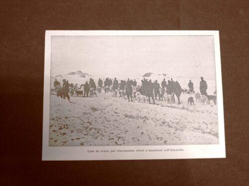 WW1 Prima guerra mondiale 1914-1918 Cani da traino di rifornimenti Adamello 1917