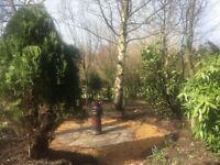 Gardener - Friendly, reliable, great value Gardening Service