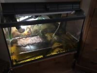 Turtles , tank and all equipment