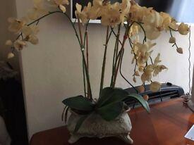 Flowers Orchids