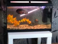 Fish tank with filter and heater and a lovely Oscar