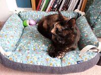 Missing cat. Torti / tortoiseshell. Linby / Hucknall
