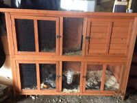 Rabbit and hutch both 18 months old. Rabbit free to a good home. Hutch £75
