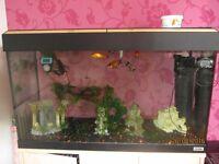 Fluval 125L aquarium