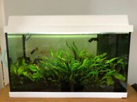 Fish tank - 2 foot (70L) - accessories included, used for sale  Hackney, London