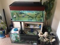 Fish tanks and equipment to swap for a kayak