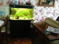 LARGE FISH TANK 150 litres withcupoards , accessories fluval pump with filter twin tube lighting