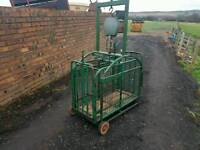 Sheep pig weigh scales crate