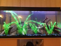 50 gallon cichlid tank with fish stand and accessories