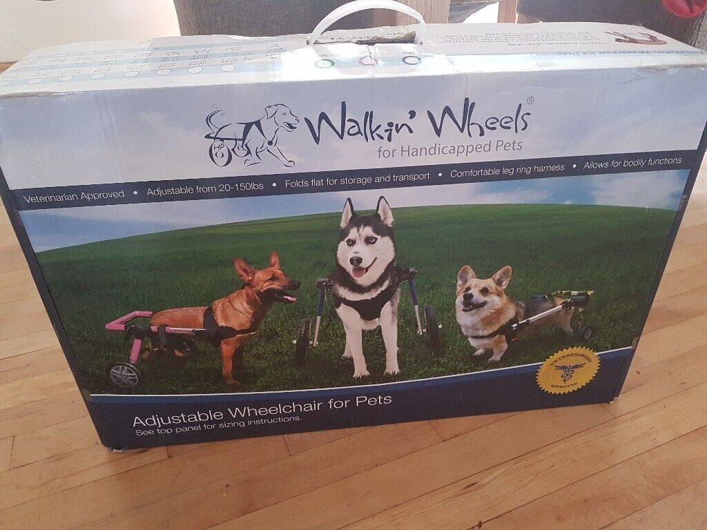 Dog wheelchair - Large | in Exeter, Devon | Gumtree