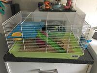 Hamster £30