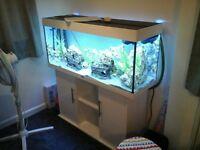 aquarium/fish tank juwel rio 240 excellent condition.