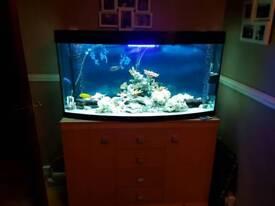 Aquarium reduced