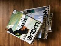 Joblot wavelength surf magazine