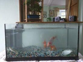 "24"" x 12"" x 12"" fish tank, and working pump"