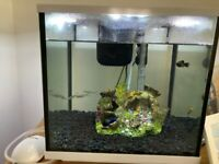26 litre Fish Aquarium for Sale