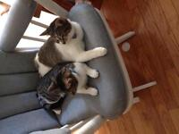 Two tabby twin sisters