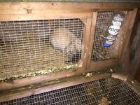 2 Pet Rabbits