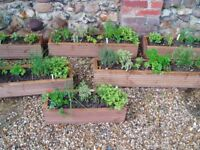 HERB TROUGHS, WOODEN, strongly made, and planted with lots of herbs ready to use.