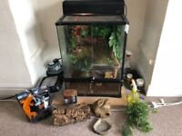 Full terrarium setup (60x45x45cm) and crested gecko