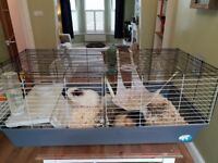 2 male guinea pigs with large indoor cage and accessory,s