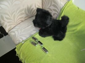 Black Scottie Dog Toy