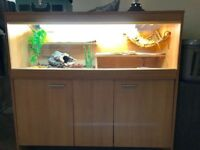 2 female bearded dragons and complete set up