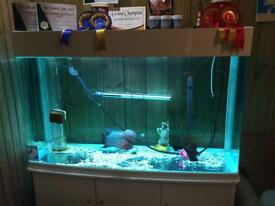 4ft fish tank with sump and all accessories