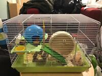 1 yr old hamster with cage