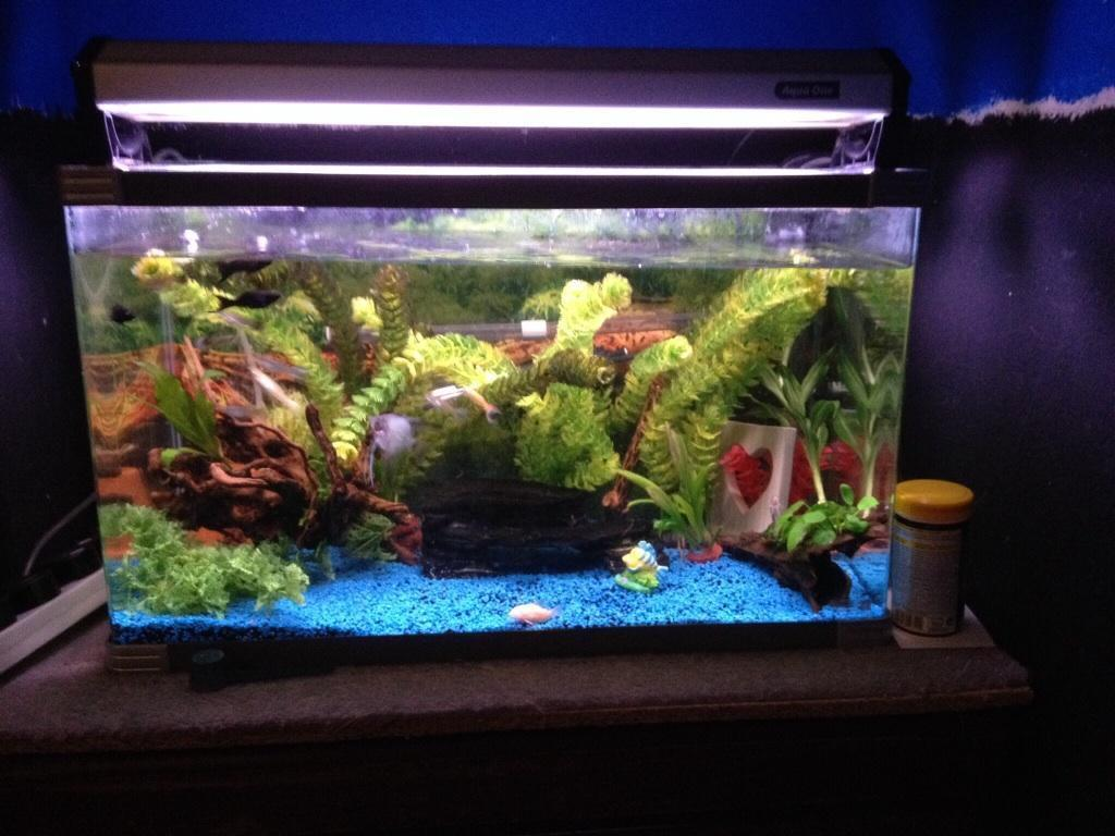 2ft fish tank full set up in hyde manchester gumtree for Fish tank sets