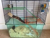 Gerbils & cage, friendly, 4 months, brothers, very cute! Huge bag of bedding included.