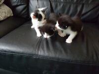 Kittens foe sale