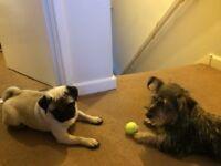 Dog walker, pet sitter - Rainbow Paws Creature Crèche