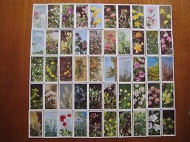"""Complete set of Brook Bond """"Wild Flowers"""" (series 1) picture cards"""