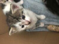 Boy kittens