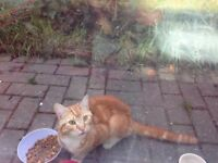 Found ginger cat