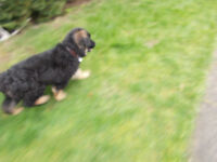 I WANT A DOG CADGE MADE URGENT ANY HELP WELCOME