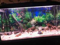Fish tank for sale with lid+lights just over 3ft