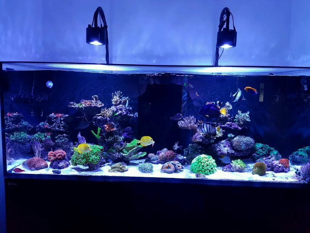 Evolution aqua marine 900, kessil a360we, ilumenair 900