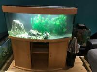 Fluval 260L Fish tank with stand
