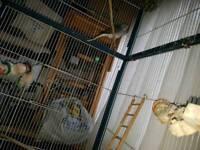 3 diamond doves