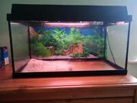 Fish tank (Juwel monolux 60 )
