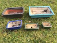 Bonsi tree clay growing trays