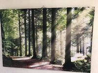Large forest picture