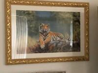 Picture tiger lovely frame large