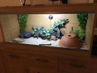 Vivexotic vivarium complete setup