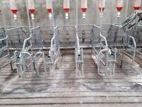 93 galvanized sow stalls