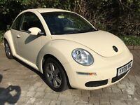 Lovely beetle looking for a new home